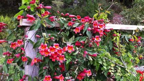 hummingbird garden march 2012 youtube