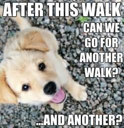 Cute Puppies Memes - pinterest the world s catalog of ideas