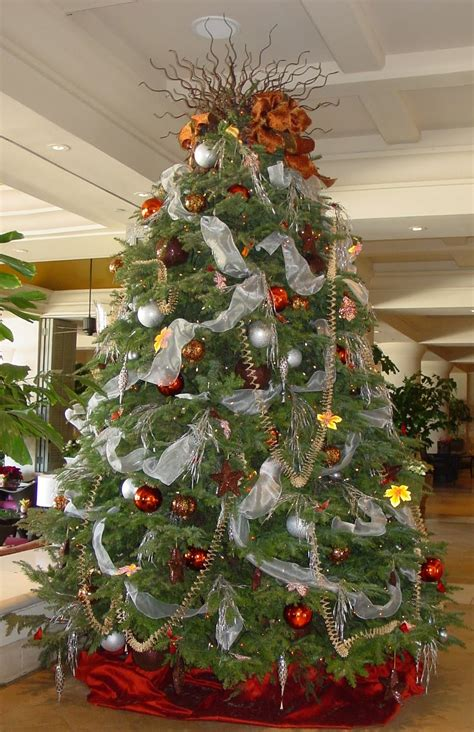 the terms best live christmas trees for decorating how before decorating live tree psoriasisguru