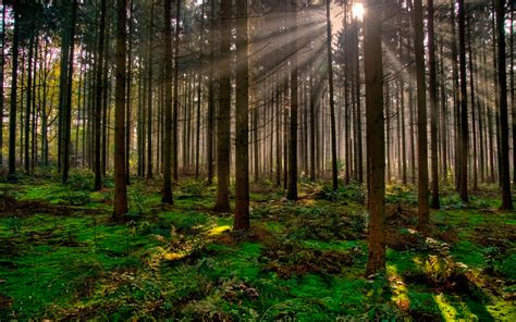 el bosque de los acciones para cuidar nuestros bosques teorema ambiental