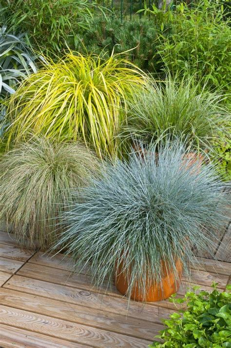 Floor And Decor Roswell by Top 28 Ornamental Grasses In Containers Evergreen