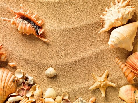 shells and sand wallpapers hd wallpapers