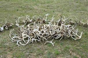 shed antler tips and strategy everything shed