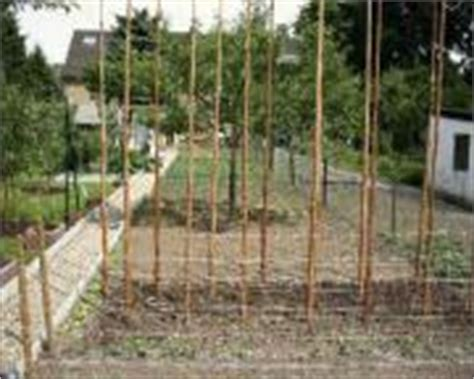 Garten Kaufen Daxlanden by Bohnenstangen Pflanzen Garten G 252 Nstige Angebote