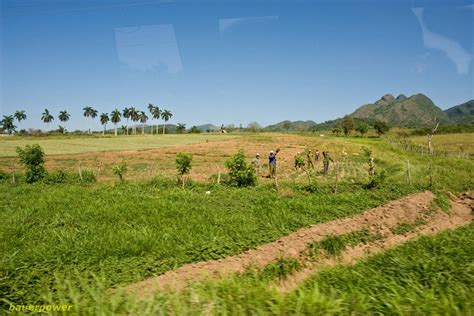 panoramio photo of typical cuban landscape