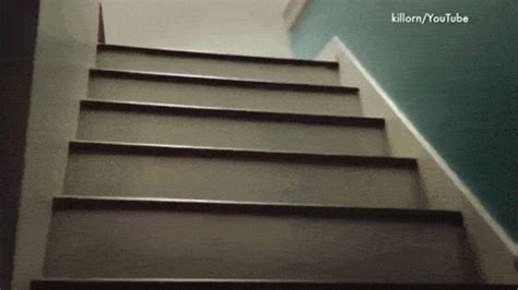 pug stairs pug stairs gif find on giphy