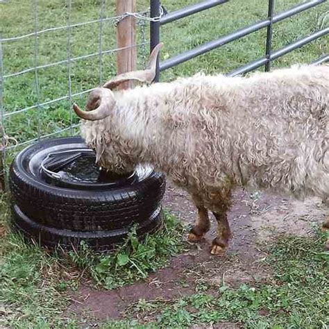 cool   tires    livestock water