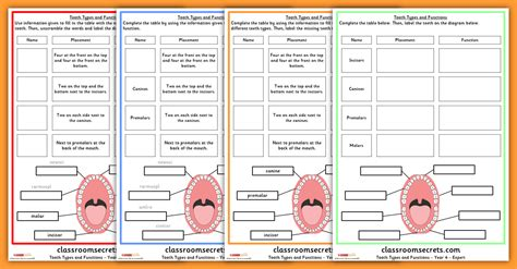 Types Of Scientists Worksheet by Year 4 Tooth Types And Functions Science Worksheets Classroom Secrets