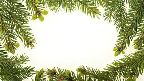 branch wallpaper fir branches wallpaper wallpapers 50659