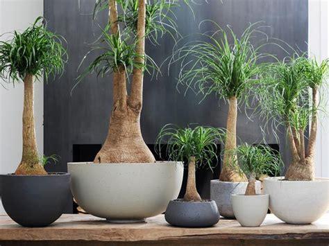 piante da interno sempreverdi 10 piante sempreverdi da appartamento perfette per ogni