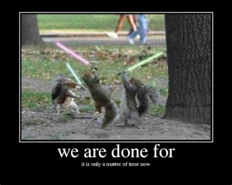 squirrels  light sabers funny graphics  facebook tagged facebook tumblr