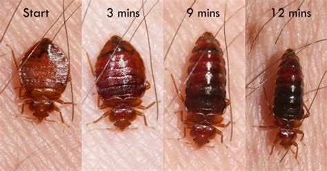 bed bugs heat with our bed bugs heat treatment prevent yourself from