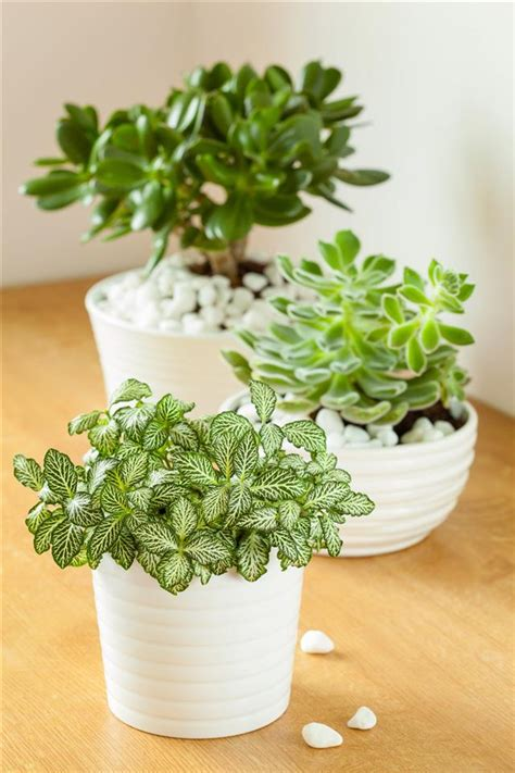 plants for indoors tall indoor plants that are beautiful and easy to maintain