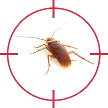 do roaches eat bed bugs common pests wild things pest solutions