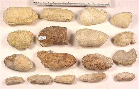 light brown colored stool coprolites