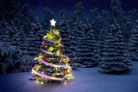 image of winters blessing christmas tree what is the origin of the tree mental floss