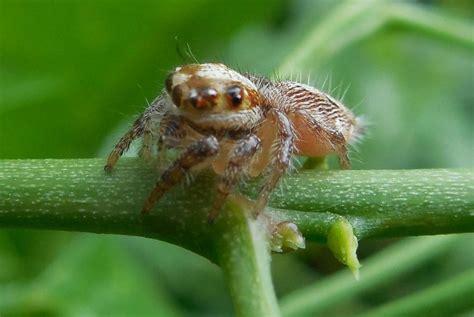 Garden Spider Utah Garden Spider Photos