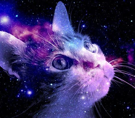 wallpaper cat galaxy i see space of purple by kkpaw on deviantart