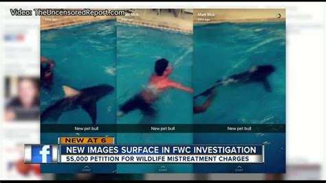 shark dragged behind boat siesta key fwc confirms investigation into more shark abuse
