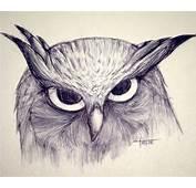 Imagenes De Buhos Para Dibujar A Lapiz