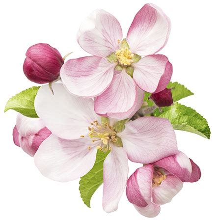 symbolic meanings of flowers that you ve been wanting to know