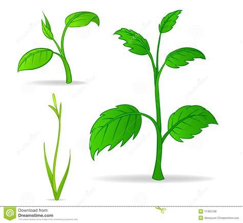desenho de plantas jogo de plantas verdes dos desenhos animados fotos de