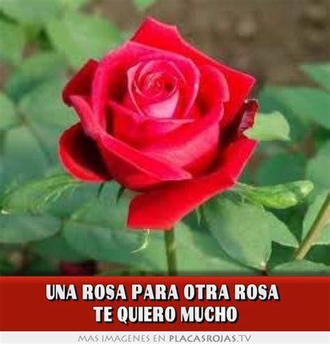 imagenes de rosas te quiero una rosa para otra rosa te quiero mucho placas rojas tv