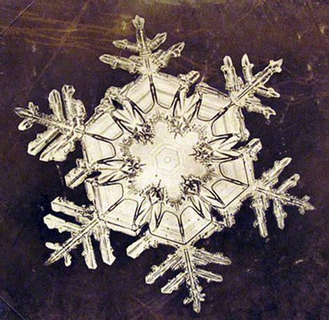 snowflake bentley photomicrograph of snowflakes by wilson bentley 1885