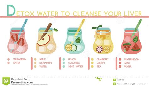 How Should A Person Detox by Detox Water To Cleanse Your Liver Stock Vector Image