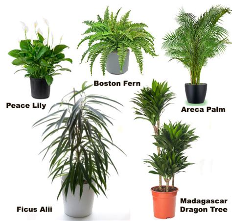 common household plant names common names of indoor plants pictures to pin on pinsdaddy