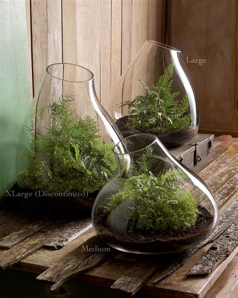 Glass Planters by Modern Glass Terrarium Indoor Garden Planter Nova68