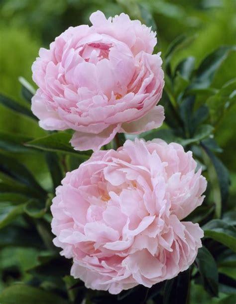 home en kolster bv magical plants flowers