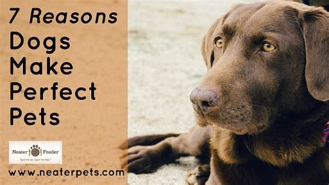 7 Reasons To A Pet by 7 Reasons Dogs Make The Pet Neater Feeder