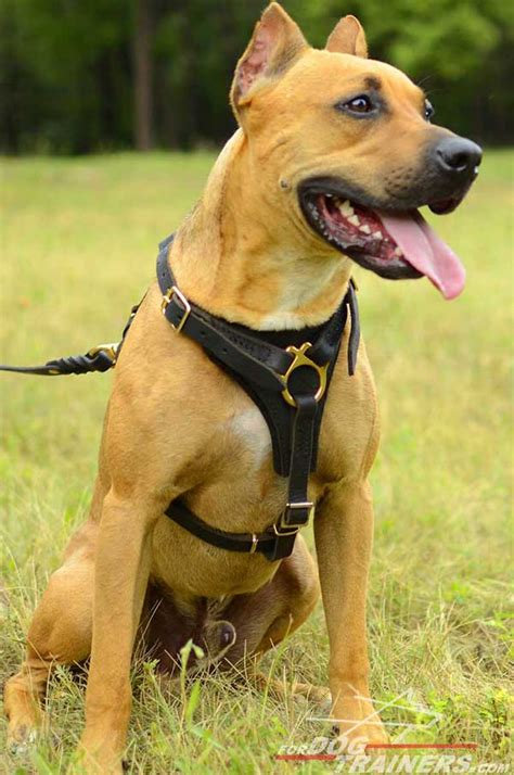 most comfortable dog harness choose most comfortable dog harness pitbull training