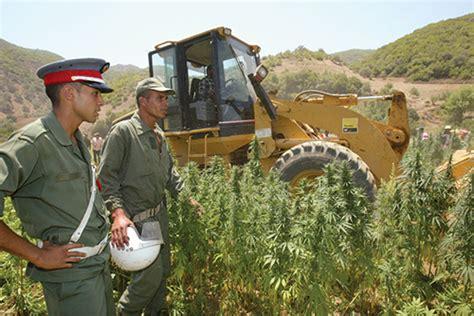 lade cannabis les partis politiques demandent la d 233 p 233 nalisation du