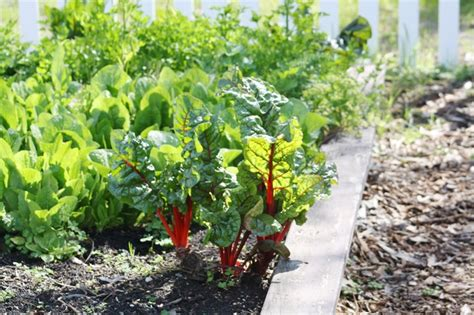 how to plant a vegetable garden ten tips for vegetable gardening during a drought green