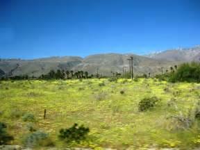 anza borrego bloom anza borrego desert wild flowers cactus nldesignsbythesea