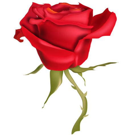 red rose flower vector art 123freevectors