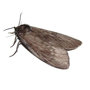 Moths In Pantry by Stop Pantry Moth Infestation Abc Pest New Castle