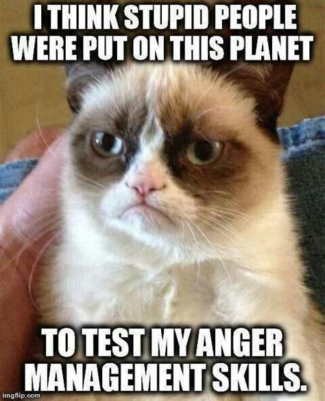 Grumpy Cat Yes Meme - ah yes grumpy cat grumpy cat pinterest