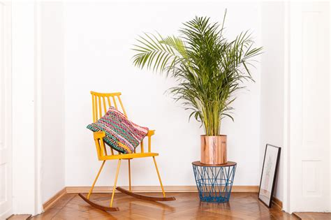 Pflanzen Wohnung by New In Pflanzen In Unserer Wohnung Josie