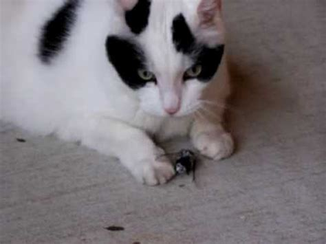 bed bugs on cats is it safe for your cat to eat bugs the pet product guru