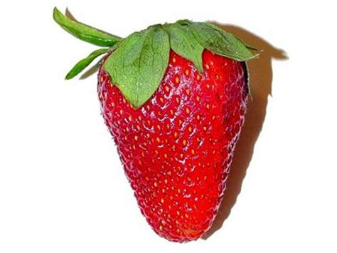 strawberry clipart strawberry clipart clipart suggest