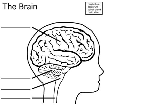 Enchanting brain diagram without labels ensign anatomy and fine brain diagram without labels image anatomy and physiology ccuart Choice Image