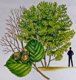 hazel treecouncil of ireland