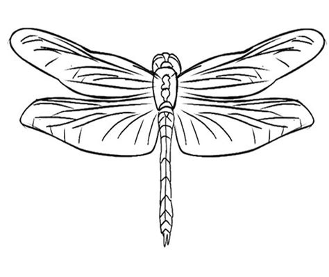 coloring page dragonfly 17 best images about dragonflies on coloring