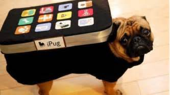 dog halloween costumes general geeking out