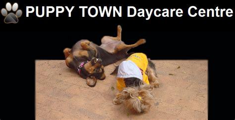 puppy town puppy town daycare centre pethealthcare co za