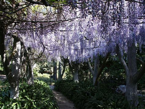 file huntington library gardens wisteria arbor 2009 jpg