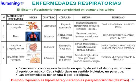 imagenes histologicas pdf sana tus enfermedades respiratorias tomas elorriaga